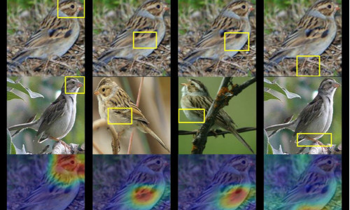 Given a photo of a mystery bird (top), the A.I. spits out heat maps showing which parts of the image are most similar to typical species features it has seen before.